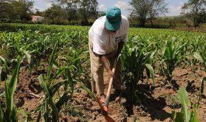 Seguridad alimentaria en Venezuela en alerta roja