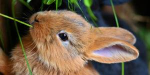 """¡SUSTO! Su hija le dijo que jugaba con un """"conejo bebé"""" y se espantó al ver qué era (VIDEO)"""