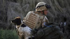 Galardonan a Kuno, el perro militar británico que perdió una pata luchando contra Al Qaeda