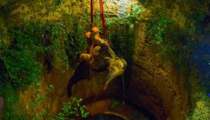 ¡Impresionante! El complicado rescate de un elefante que cayó en un pozo de 20 metros (VIDEO)