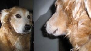 Curiosa prueba descubrió una habilidad desconocida en los perros