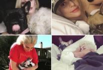 Al paseador de los perros de Lady Gaga le dispararon cuatro veces en el pecho y le robaron dos Bulldogs