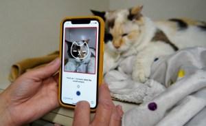 """Desarrollaron una aplicación que puede """"evaluar"""" el dolor que experimentan los gatos"""
