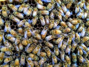 Hombre murió y otros cinco resultaron heridos tras ataque de abejas en Arizona