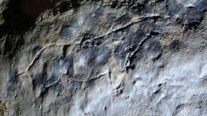 Constataron el origen humano de las pinturas más antiguas del mundo