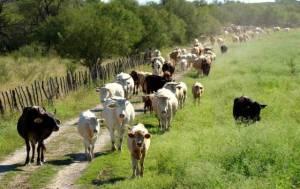 Cerca de 500 productores larenses, desesperados por la falta de electricidad en la región