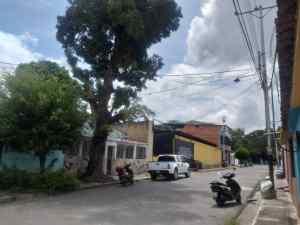 Árbol de 30 metros de altura amenaza con caer sobre viviendas y tendido eléctrico en Bejuma