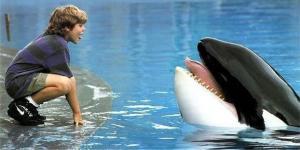 """La trágica y agónica muerte de Keiko, la orca que inspiró la película de """"Liberen a Willy"""""""